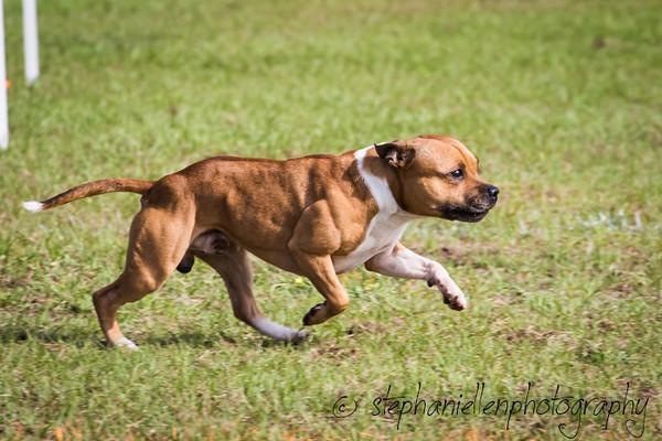 _MG_2565Up_dog_International_2016_StephaniellenPhotography.jpg
