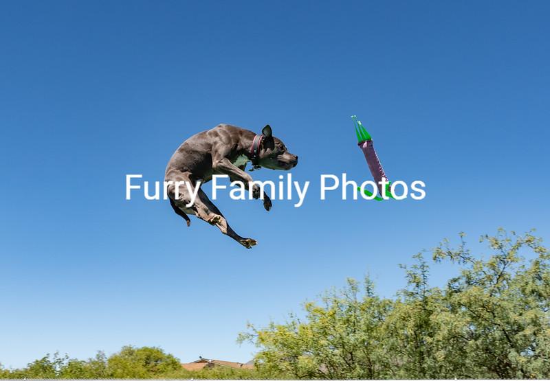 2020 June Animal Watchers NADD Trials