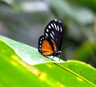 Butterflies  (5)