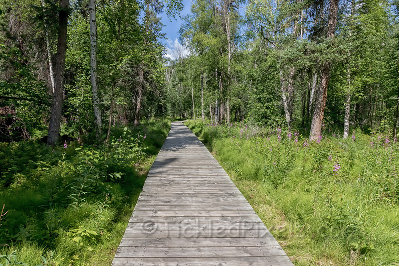 Boardwalk into Liard River Hotsprings