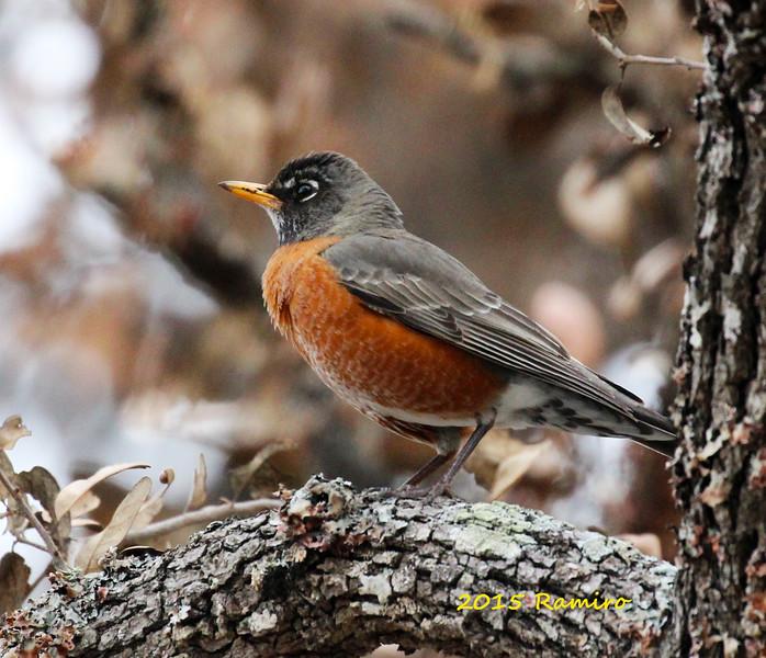 Robin 4-4-15 195.jpg