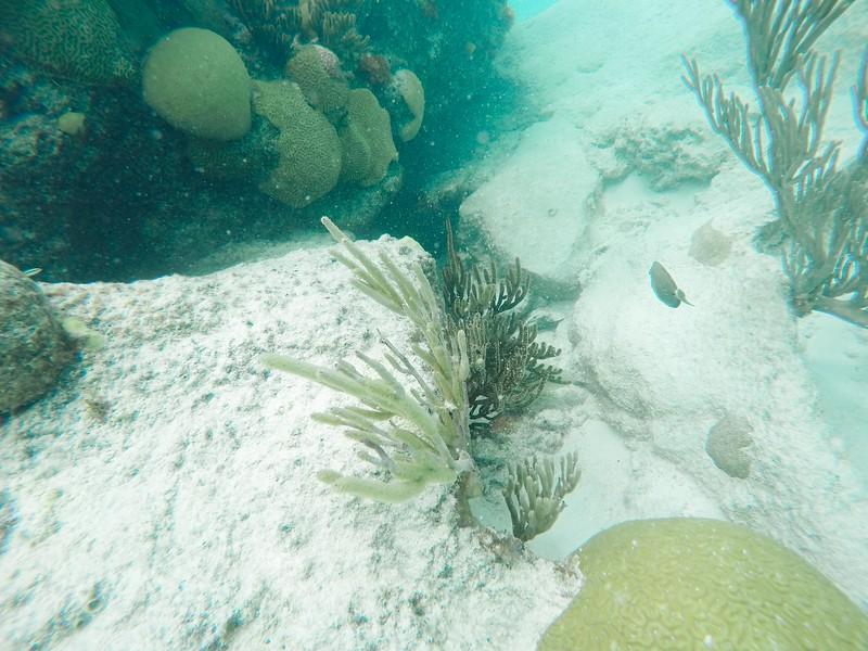 Bermuda-27.jpg