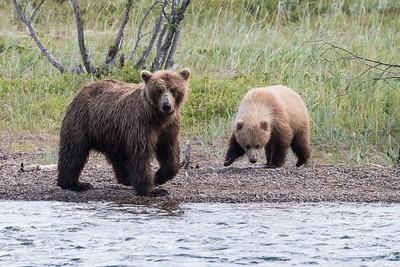 STEVE - ALASKA Bears
