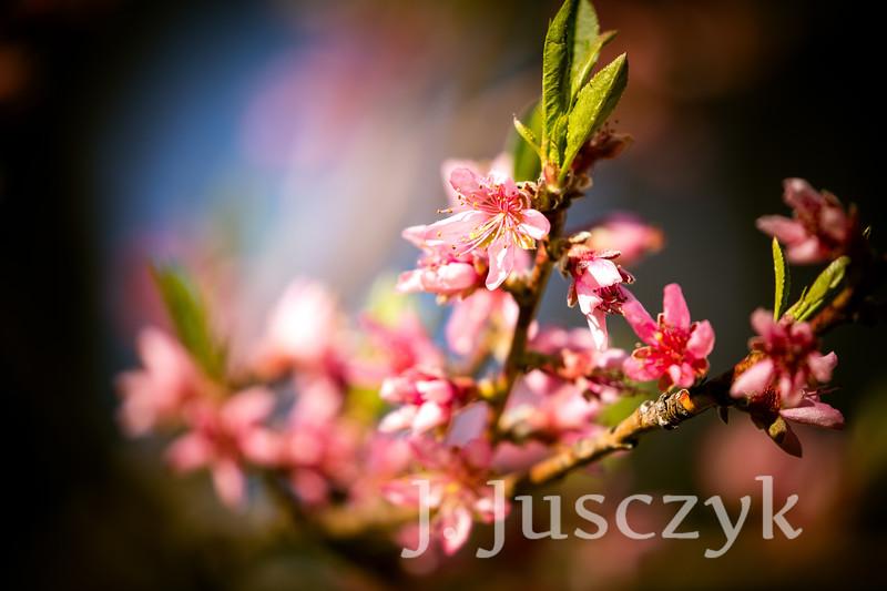 Jusczyk2021-9046.jpg