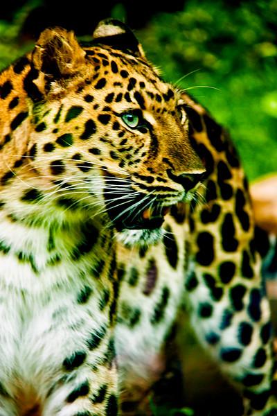 Animals_170.jpg