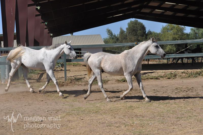 EB&Horses-126.jpg