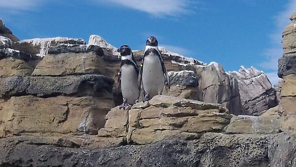 Zoo2011