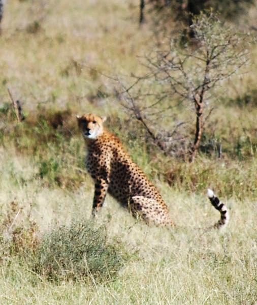 Serengeti (134).JPG