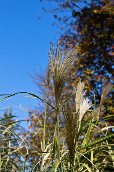 meadowlark 10-17-10-49.jpg