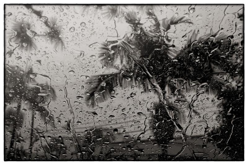 January 31 - Rain, Los Angeles-1.jpg