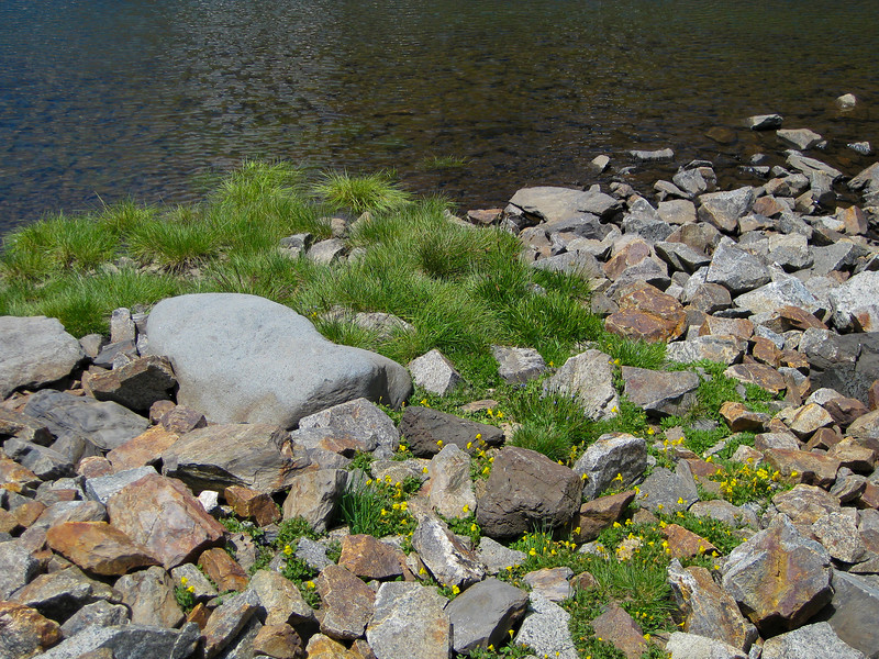 Little bit soil between rocks is enough for grass and flowers to grow.
