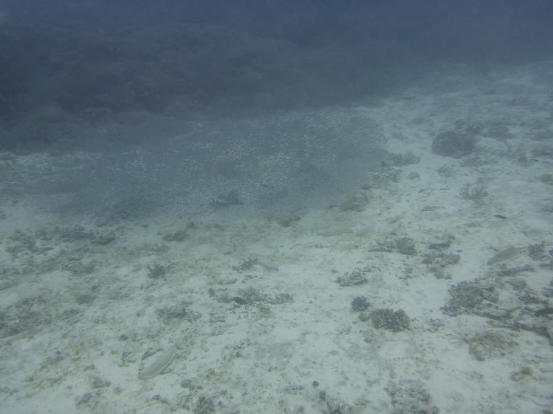 09. Lady Elliott Island-0396.jpg