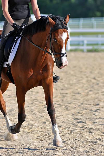 Horses July 2011 174a.jpg