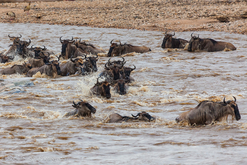 North_Serengeti-55.jpg