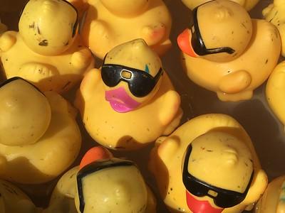 15th Annual Rubber Ducky Festival (2017)