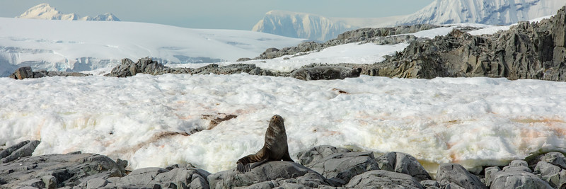 2019_01_Antarktis_05839.jpg