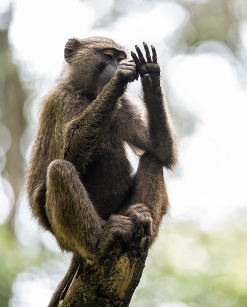 Uganda_T_Chimps-1502.jpg