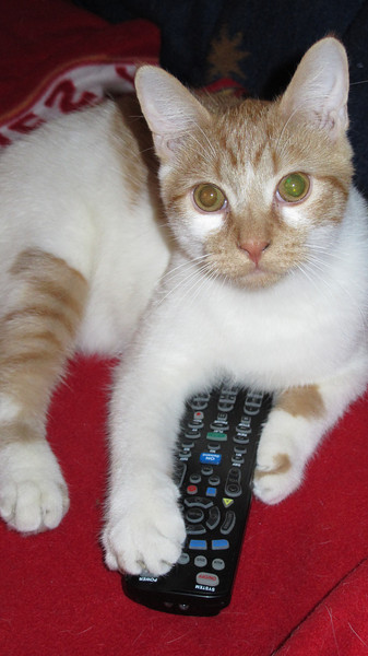 My Cat Hogging the Remote, My House, Tamaqua (3-25-2014)