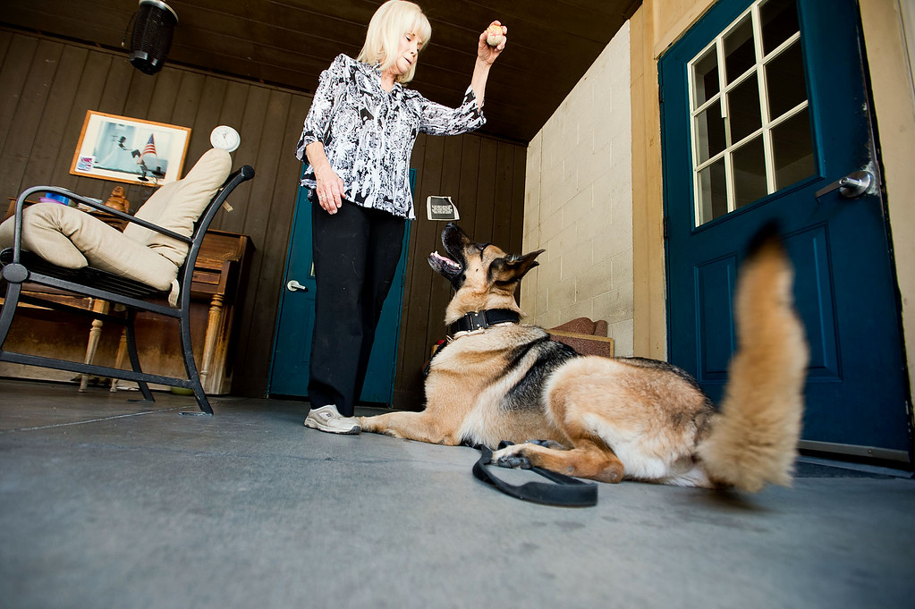 . Bruno is rewarded with a ball by owner and handler, Cher Abellano, after he had sniffed through residents belongings at Whittier Area First Day Coalition on Wednesday, June 26, 2013. Bruno and his handler, Cher Abellano, will visit the facility randomly throughout the year to conduct safety checks. (SGVN/Staff photo by Watchara Phomicinda)