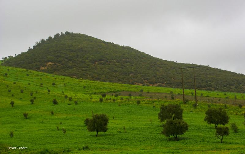 נוף ירוק 5.jpg