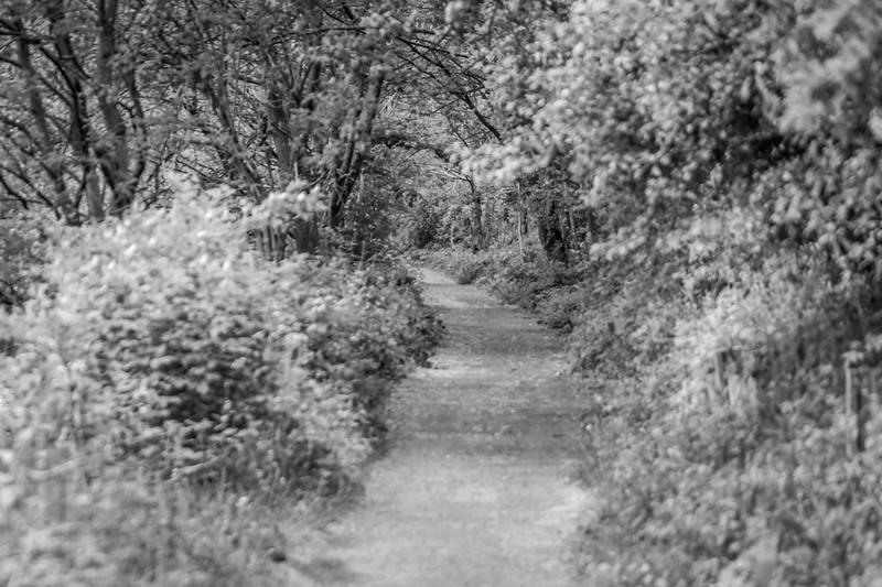 Sunday Stroll-66.jpg