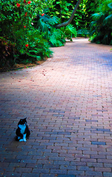 Key West Hemingway Cat