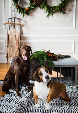 Oakley + Penny | November 2019