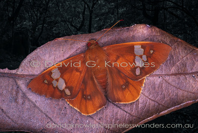 Australian Rainforest Insects