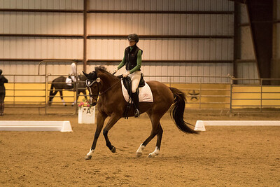 Horse 576