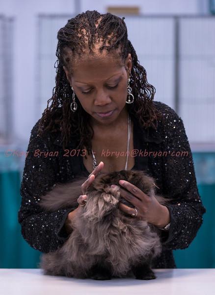 CatShow2014070_1.jpg