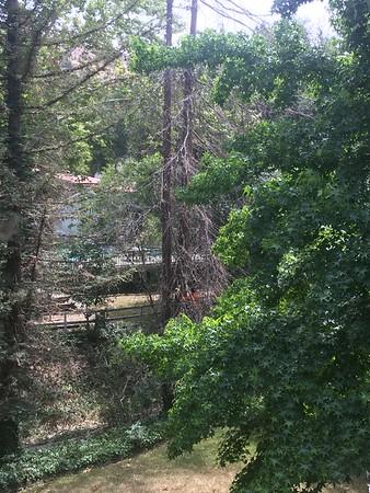 2016-06-10 Tree Cutting