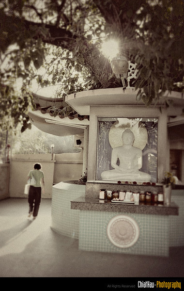 MY told me that this is the tree where Buddha get his enlightenment.