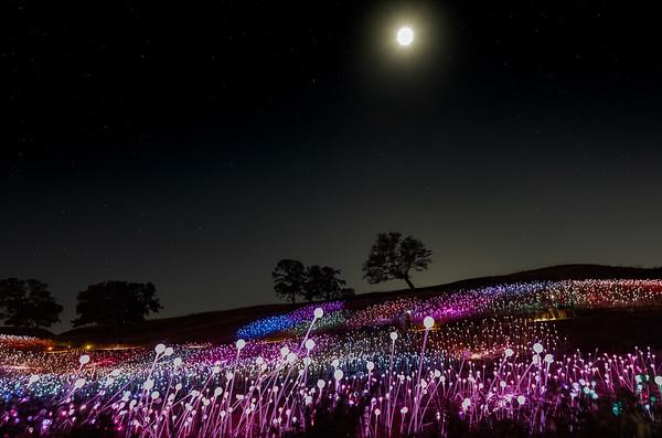 Paso Robles, Ca Sensorio Field of Lights