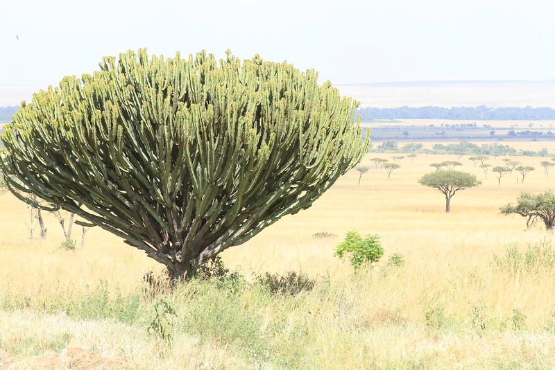 Kenya Part2 '15 891.JPG