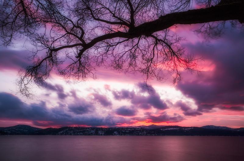 ~Spirit Tree~