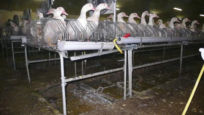 canards-foie-gras-2008-fr-B-011.jpg