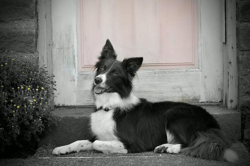 Lucy 4 bw.jpg
