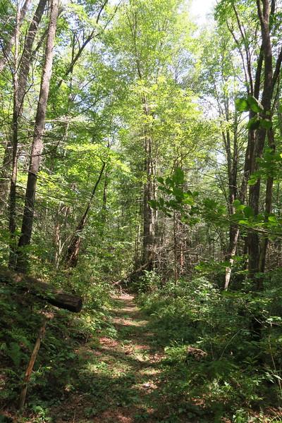 USFS Path