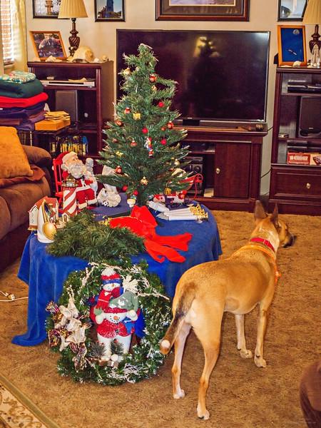 _1050004_2_  pl5 12x40 christmas take down,tip,paws,mal,mov.jpg