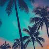Hawaii Palm Trees At Sunset