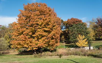 Forest Park October 28 2014