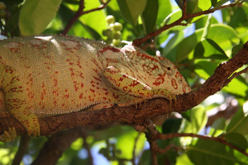 Madagascar, Fauna & Flora 11 Oda.jpg