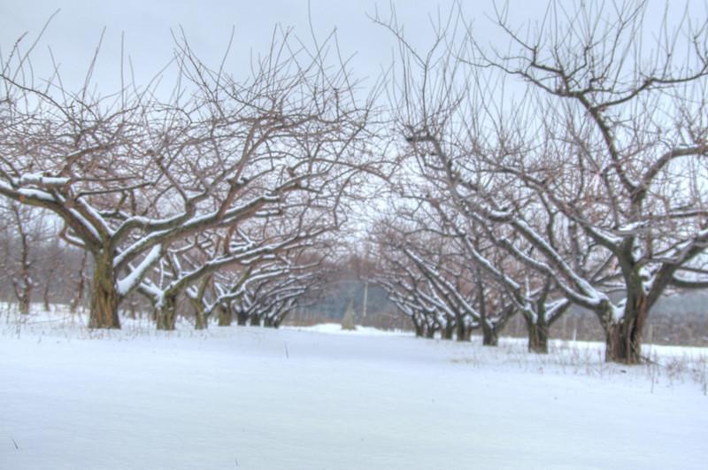 Easy Pickins Winter 030-1677215241-O.jpg