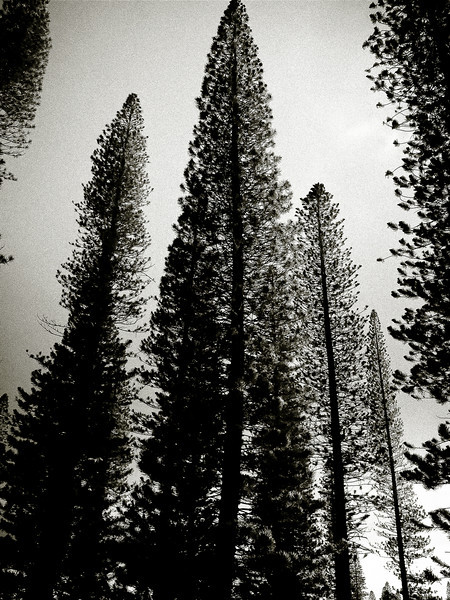 four seasons lodge trees vert.jpg