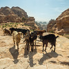 Goats on the Rock, Ain't No Surprise, Petra, Jordan
