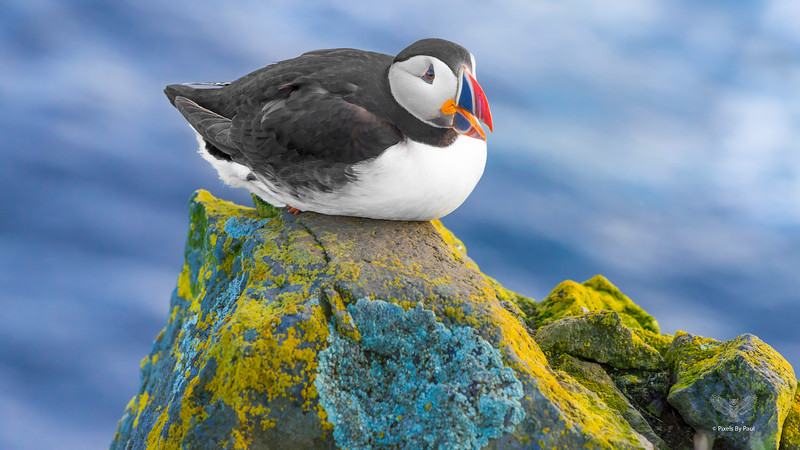 053 Puffin Talk on Rock 16x9.jpg