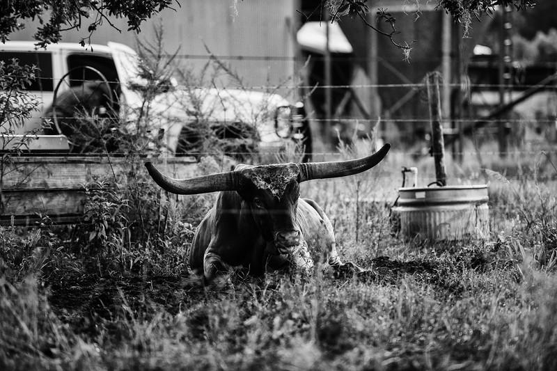 Breely Barthle Ranch B&W 2 (1 of 20).jpg