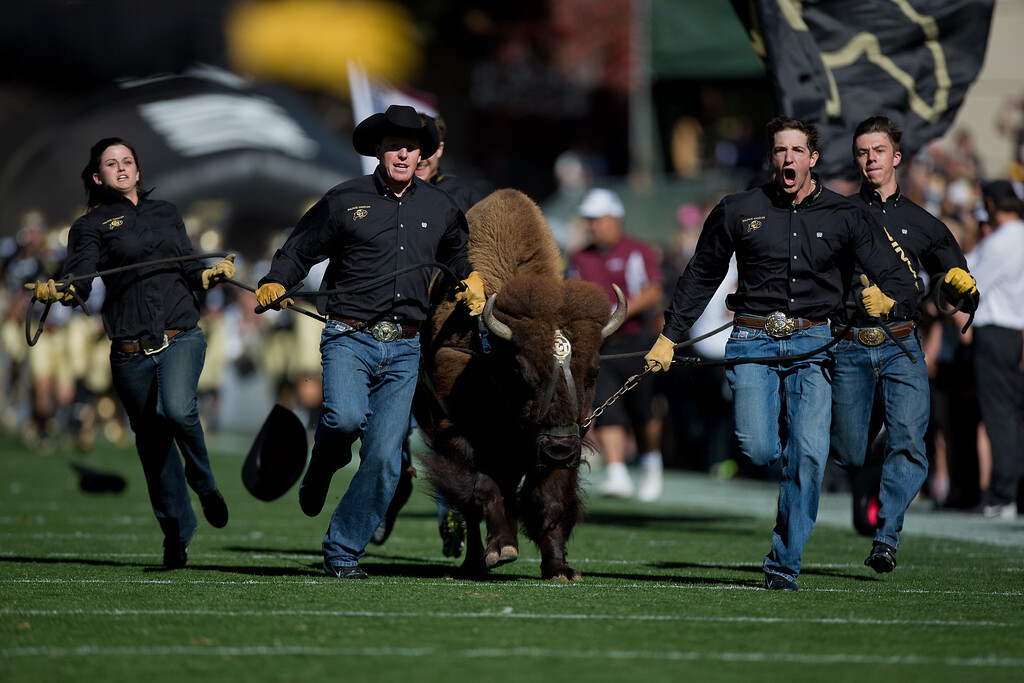 . BOULDER, CO - OCTOBER 25:  Ralphie V the mascot of the Colorado Buffaloes takes the field before a game against the UCLA Bruins at Folsom Field on October 25, 2014 in Boulder, Colorado. (Photo by Justin Edmonds/Getty Images)