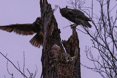 3/21/20 owl full