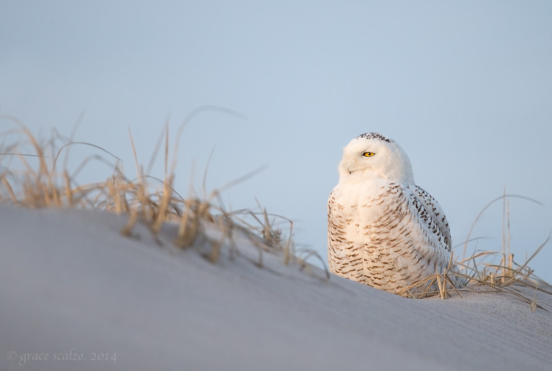 Joanie's Owl_O8U8500-Edit.jpg